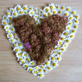 Heart 12 – 2012
